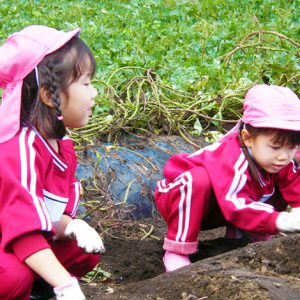 10月芋掘り